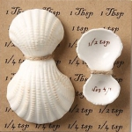 Shell Measuring Spoons